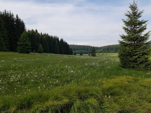 Schwarzwassertal_Wollgraswiesen