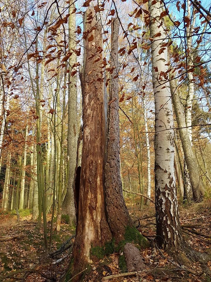 Tod im Holz – Leben im Holz